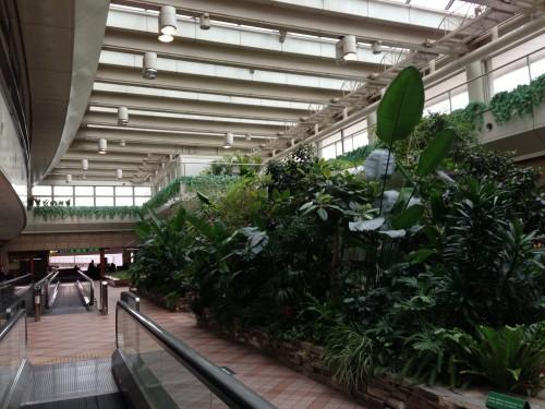 羽田空港のロビー 緑ある