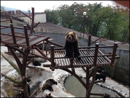 クマ牧場の高いとこにいる熊