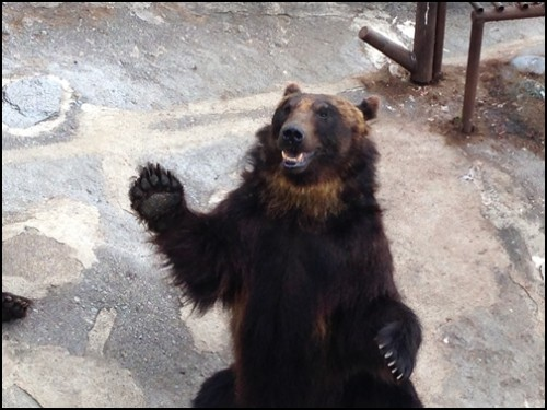 お腹すいた熊