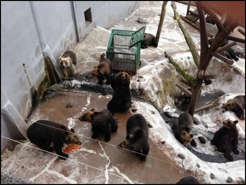 クマ牧場熊だらけ