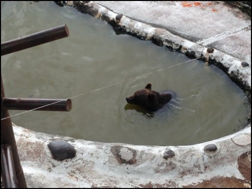 熊牧場のお風呂