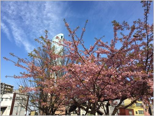 練馬北町電車公園の桜